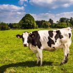 「和牛」「国産牛」の違いとは? 意味と値段や味はどうなの?