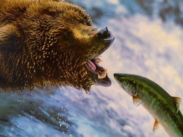 鮭の豆知識